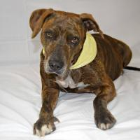 Diamonds Journey: From a Street Dog to Queen Bee